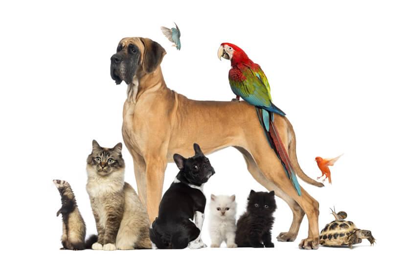 Практически в каждой семье есть животное