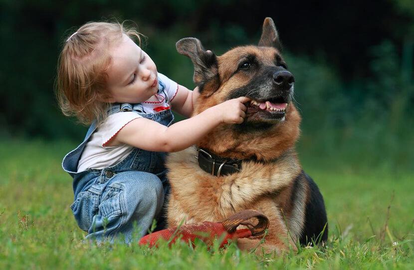 желание ребёнка завести собаку, овчарку